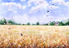 Watercolor Landscape with Wheat Field. Hand drawn watercolor illustration. Nature landscape.  Summer rural scene with  wheat field, clouds, trees and flying Stock Photography