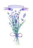 Watercolor lavender bouquet. Botanical illustration. Watercolor lavender bouquet. Lavender flowers  on white background Stock Photos
