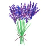 Watercolor lavender bouquet, tied with a ribbon stock illustration
