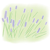 Watercolor lavender field Stock Photo