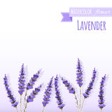 Watercolor lavender field border. Background with hand painted . Vector illustration Royalty Free Stock Photo