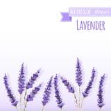 Watercolor lavender field border. Royalty Free Stock Photo