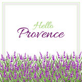 Watercolor lavender field. Provence style. Watercolor hand paint background with lavender flowers.  Stock Photography