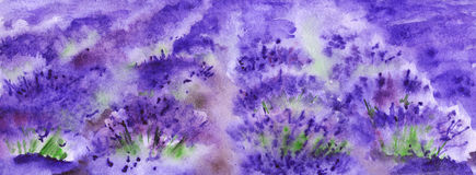 Watercolor lavender fields nature France Provence landscape Stock Photography