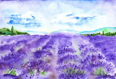 Watercolor lavender fields nature France Provence landscape.  Stock Photos
