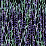 Watercolor lavender pattern. Watercolor lavender flowers. Hand painted herbal seamless pattern Royalty Free Stock Photos