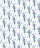 Watercolor lavender seamless pattern. Botanical illustration. Watercolor lavender seamless pattern on white background Royalty Free Stock Photography