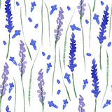 Watercolor lavender seamless Royalty Free Stock Images