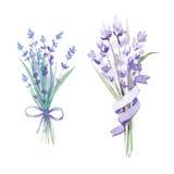 Watercolor lavender set. Botanical illustration. Watercolor lavender set with bow and tape. Lavender flowers isolated on white background Stock Images