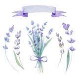 Watercolor lavender set. Botanical illustration. Watercolor lavender set with bow and tape. Lavender flowers  on white background Stock Photos