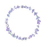Watercolor lavender wreath. Botanical illustration. Watercolor lavender wreath. Lavender flowers  on white background Royalty Free Stock Image