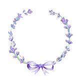 Watercolor lavender wreath with bow. Botanical illustration. Watercolor lavender wreath with bow. Lavender flowers  on white background Stock Image