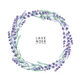 Watercolor lavender wreath. Hand painted provencal herbs isolated on white background Stock Photo