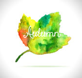 Watercolor leaf design element Stock Photo