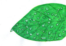 Watercolor leaf with water drops Stock Photos