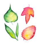Watercolor Leafs Royalty Free Stock Photos
