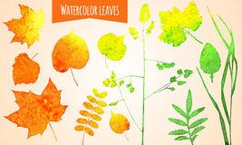 Watercolor leaves Stock Photos