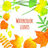 Watercolor leaves Royalty Free Stock Photos