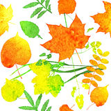 Watercolor leaves Royalty Free Stock Photography