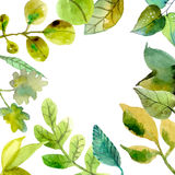Watercolor leaves background Royalty Free Stock Photography