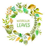 Watercolor leaves collection Stock Images