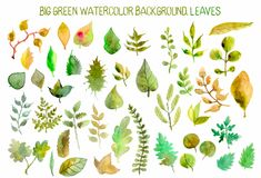 Watercolor leaves collection Stock Photos