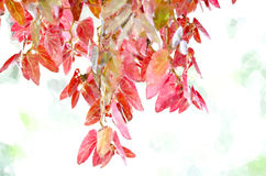 Watercolor Leaves Royalty Free Stock Photo
