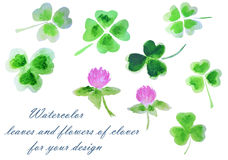 Watercolor leaves and flowers of clover for your design Royalty Free Stock Photo