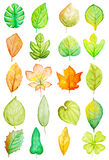 Watercolor Leaves Stock Images