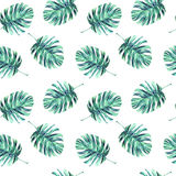 Watercolor leaves monstera Royalty Free Stock Image