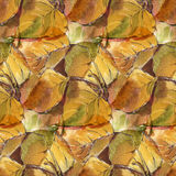 Watercolor  leaves Royalty Free Stock Images