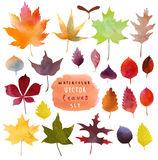 Watercolor leaves set in  Royalty Free Stock Photo