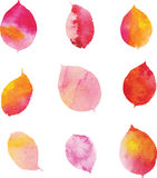 Watercolor leaves Stock Image