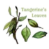 Watercolor leaves set. With branch, hand drawn illustration Stock Photography