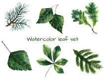 Watercolor leaves. Royalty Free Stock Images