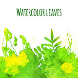 Watercolor leaves Stock Photography