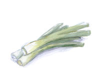 Watercolor leek, ingredients for dish Stock Image