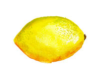Watercolor lemon Stock Photos