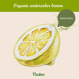 Watercolor lemon. Hand drawn illustration on white background. Royalty Free Stock Image