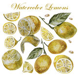Watercolor lemon isolation on a white background Stock Photography