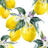 Watercolor lemon pattern Stock Photos