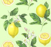 Watercolor lemon pattern on light green background. Lemon seamless pattern on light green background. Hand drawn watercolor illustration Royalty Free Stock Images