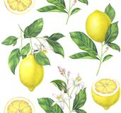 Watercolor lemon pattern on white background. Lemon seamless pattern on white background. Hand drawn watercolor illustration Royalty Free Stock Photography