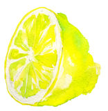 Watercolor lemon Royalty Free Stock Photography