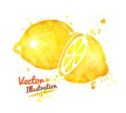 Watercolor lemon Stock Images