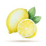 Watercolor lemon yellow Royalty Free Stock Photography