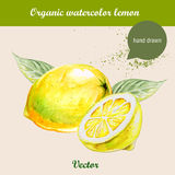 Watercolor lemons. Hand drawn illustration on white background. Stock Images