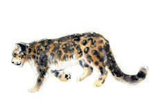 Watercolor leopard. Beautiful leopard. Watercolor leopard. Watercolor wild cat. Watercolor wild animals. Watercolor animals. Watercolor pets. Watercolor leopard Royalty Free Stock Photography