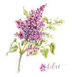 Watercolor lilac flower Royalty Free Stock Photos