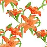 Watercolor lili seamless pattern Stock Photos